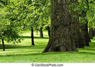 Park in spring - Trees in a park, spring season