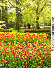 Park in spring with colorful yellow-red tulips