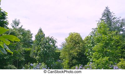 Park in summer, hydrangeas. Green trees, lawn and flowers.