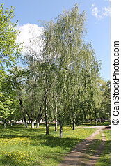 Park in summer