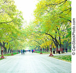 Park in the fresh air of the Boulevard  and people