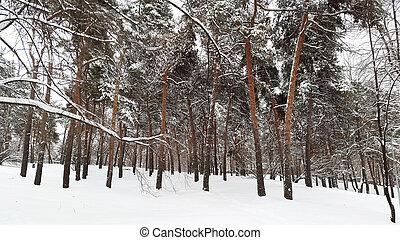 park in winter under snow
