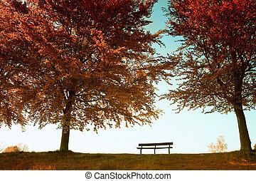 park, jesienny