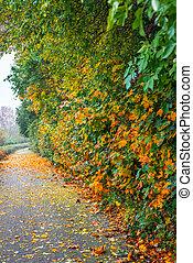 park, laan, met, autumn leaves