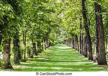 park landscape allee