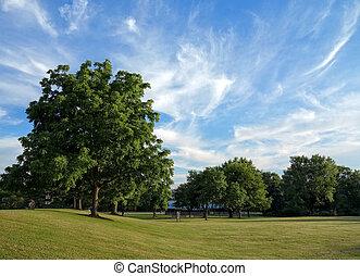 Park Landscape - Beautiful park landscape on a summer day.