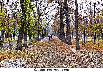 park landscape in autumn