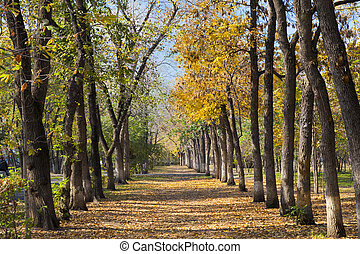 park landscape in autumn