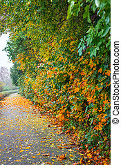 Park lane with autumn leaves