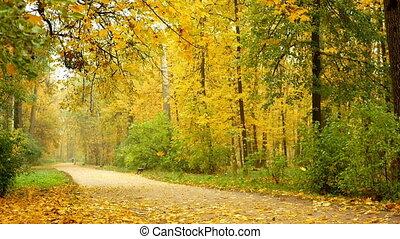 Park leaves fall autumn