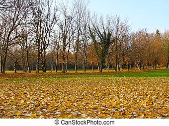 Park leaves