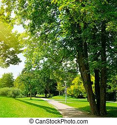 park, meadow and blue sky
