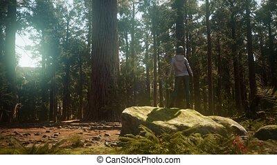 park, nationale, sequoia, vrouw, yosimite