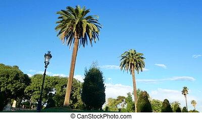 Park palm summer sun