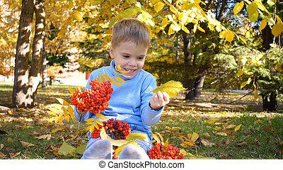 park., rire, ensoleillé, enfant, rowan, jour, jeux, parc, berries., extérieur, feuilles automne, il, merrily, jaune, divertissement