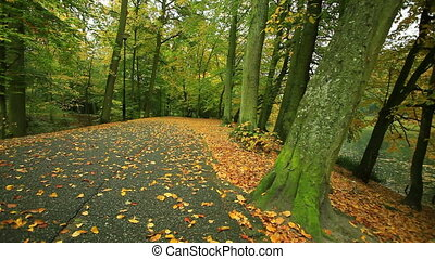 Park road landscape. Full HD. - Autumn pathway alley. Park...