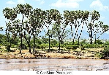 park, samburu, afrikaan