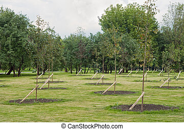 park, saplings