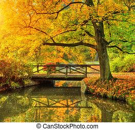 park., scenérie, překrásný, podzim