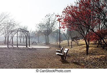 Park scene in Autumn season - Park scene. Autumn foggy...