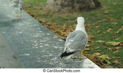 park, seagulls, publiczność