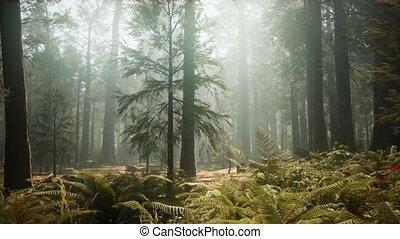 park, sequoia, bos, nationale, reus, californië ...