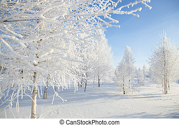 park., snöig, träd vinter, natur
