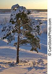 park, snow-bound, baum