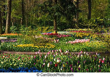 park, tło, wiosna, time.