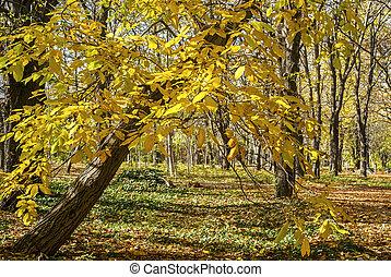 Park tree in autumn