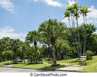 Park under blue sky 3