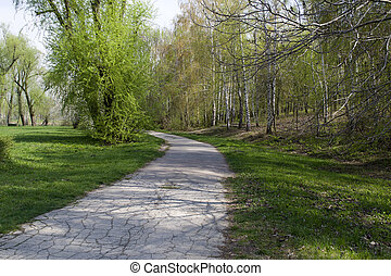 Park with a long road along the trees.