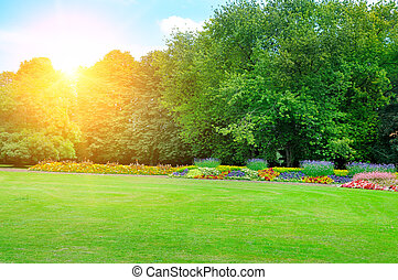 Park with beautiful flowers and sun. Spring landscape.