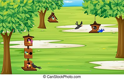 Park with birds in bird house on the tree