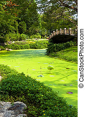 Park with green water
