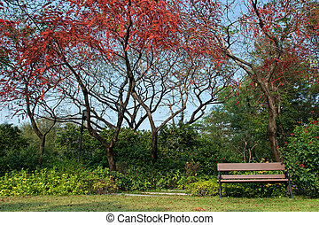 Park with red flower tree