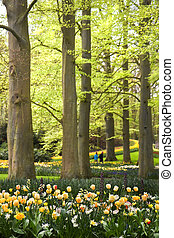 Park with spring flowers under old beechtrees