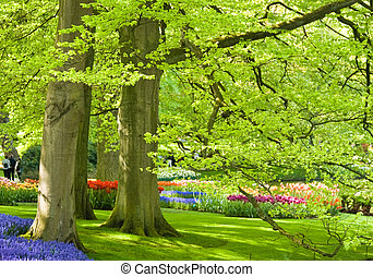 Park with trees and flowers in spring
