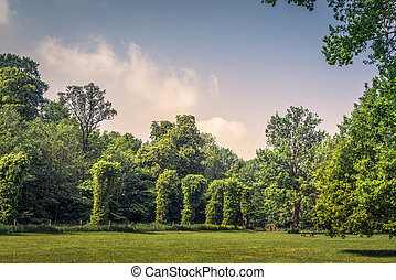 Park with various green trees