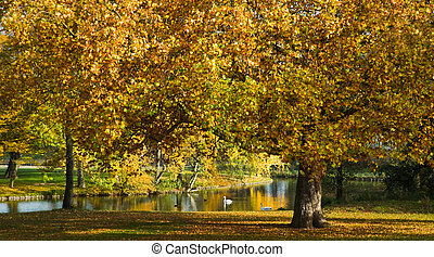 Park with yellow and orange plane trees in fall