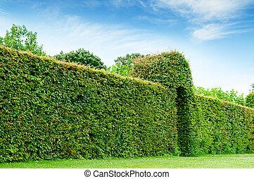 park, zielony, lato, płot