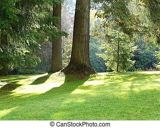 parkera, och, träd