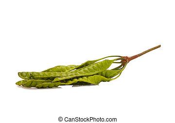 Parkia speciosa thai vegetable isolated on white background