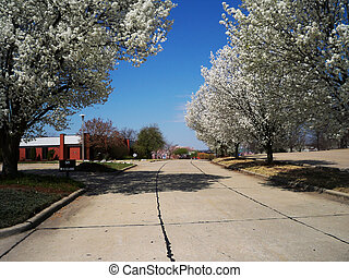 Parking Lot - Pear tree lined parking lot with brick office...