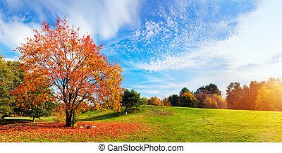 parkosít., színes, ősz, bukás, fa, leaves., panoráma