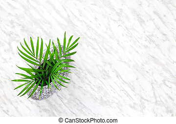 Parlor palm leaves in a granite vase on marble background