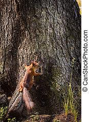 parque, árvore, esquilo