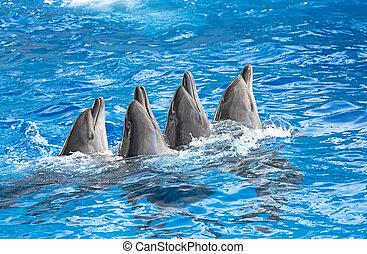 parque acuático, delfines