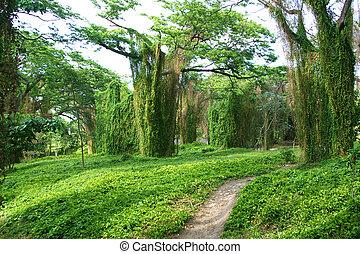 the Metropolitan Park of Havana or Park Almendares is a green area of the capital of Cuba