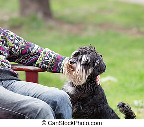 parque, cão, homem